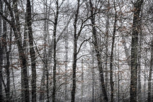 snow weather canon wv westvirginia 365 sigma1770mmf2845dcmacro canon70d