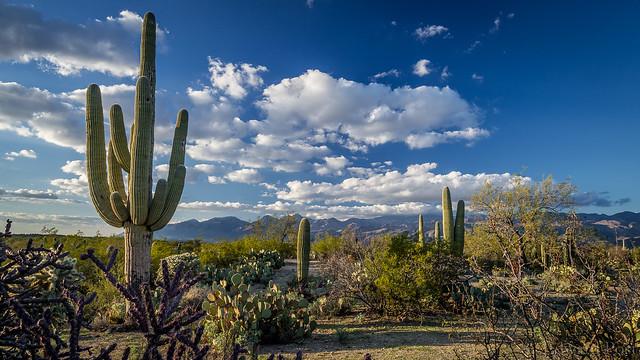 Ed Post - Saguaro National Park-East