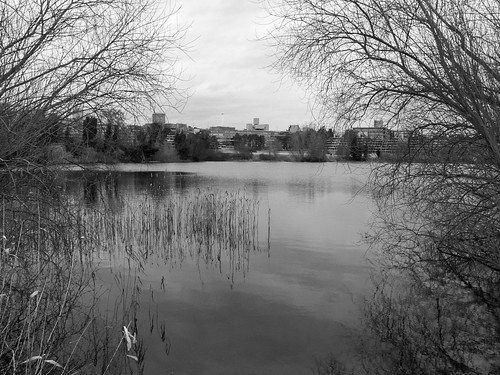 trees england water uea norfolk norwich broad rushes eastanglia universityofeastanglia