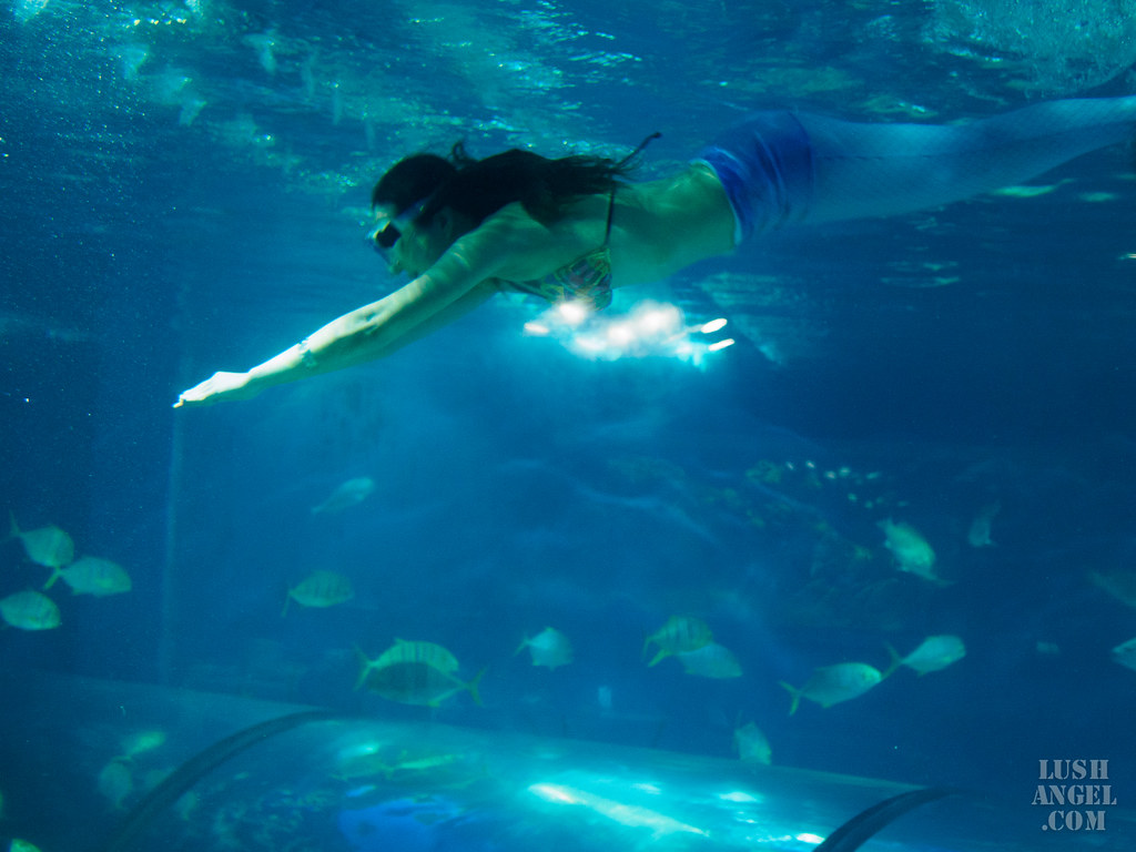 boracay-crown-regency-oceanarium
