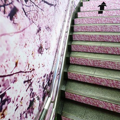 そんな階段。