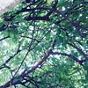 Se nossa vida, caminhos e escolhas pudessem ser representados, com certeza se assemelharia mais a esta imagem do que com um caminho reto e linear.  Na imagem a amoreira guardiã do meu jardim.   #árvores #caminho #vida