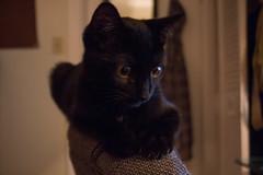 Token  the Black Cat
