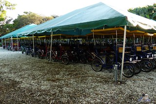 Zoo Miami 14.11.2014 195