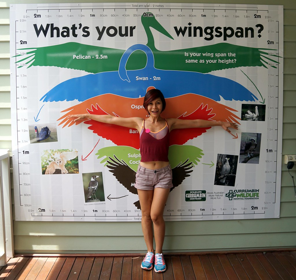 Currumbin Wildlife Sanctuary - hospital - rebecca saw