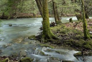 Glade Creek, Bledsoe SF, Bledsoe County, Tennessee 3