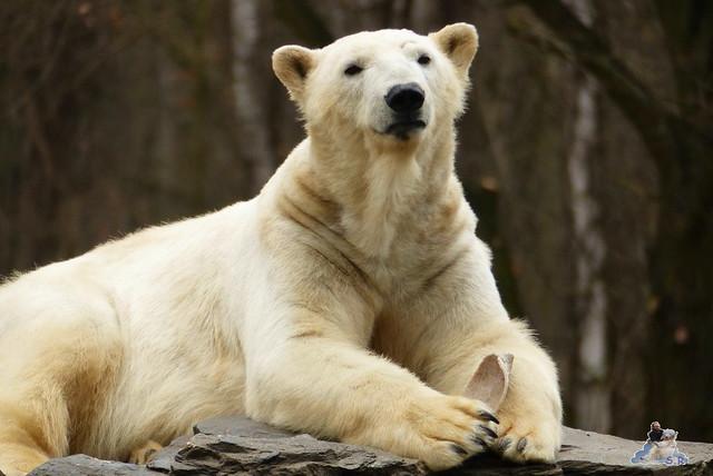 Tierpark Berlin 21.02.2015  0208