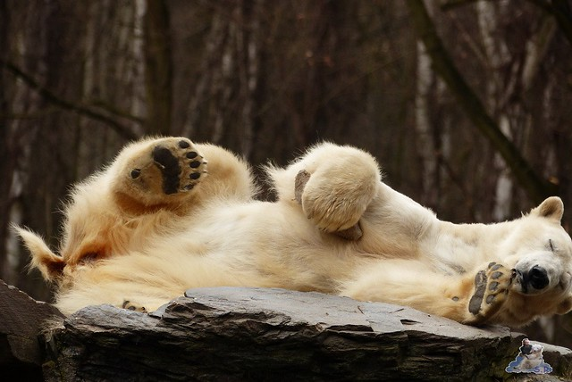 Tierpark Berlin 21.02.2015  0229