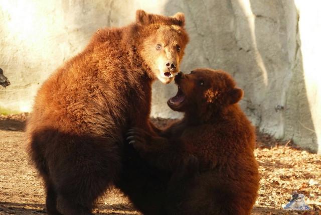 Tierpark Hagenbeck 27.02.2015  162