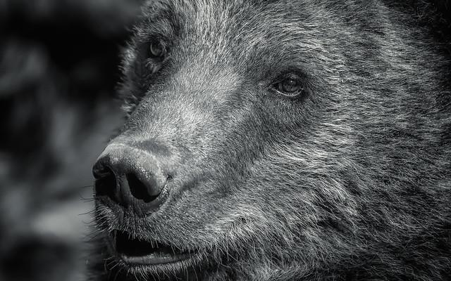 sacce22 - Teddybear