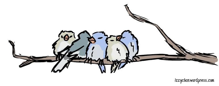 fat birds fluffy