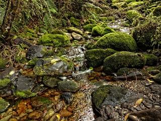 "Single Shot ""HDR"" ~ Kawhaka Forest Stream"