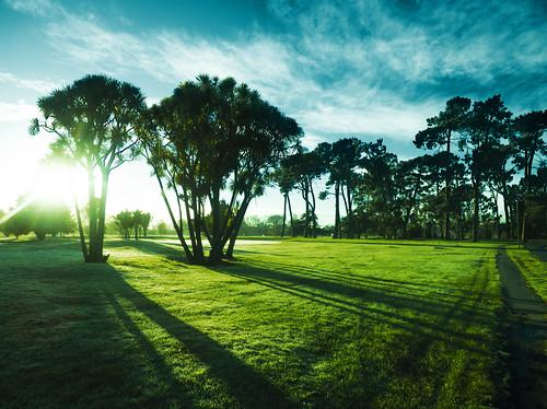 park blue trees winter shadow newzealand christchurch sky cloud sun black green sunshine silhouette sunrise dawn canterbury nz southisland hagley