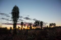 Uluru (Ayer's Rock), Northern Territory, Australia.