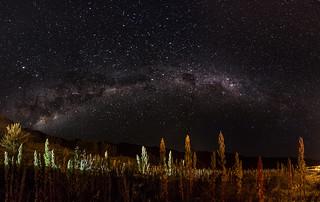 Voie lactée au dessus d'un champ de Quinoa