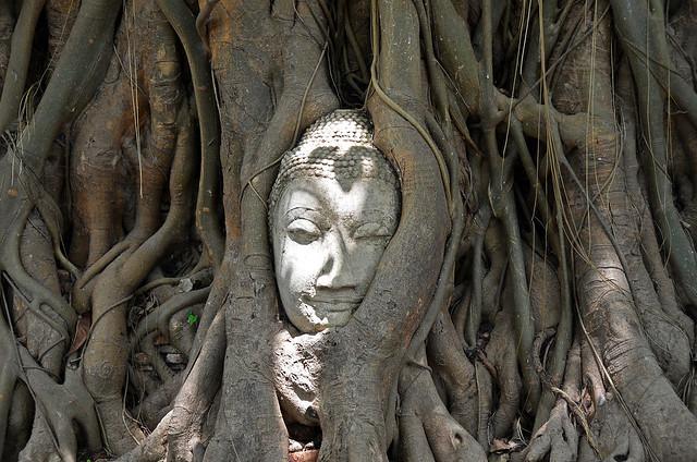 Cabeza del buda del arbol de Ayutthaya