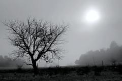 L'agonie du soleil...  The agony of the sun...