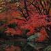 六義園 / Rikugi-en Garden by Natsu_Otter