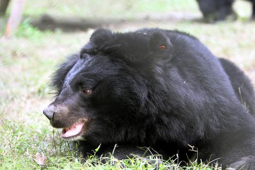 grande Dick orsi Ghetto vagina