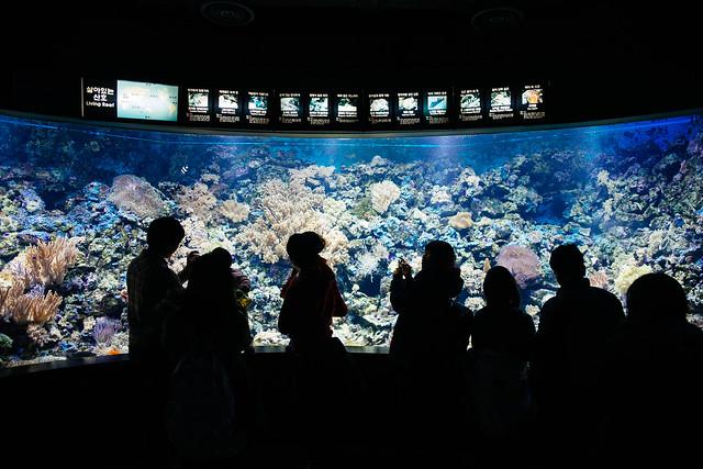 Seoul: Coex Aquarium