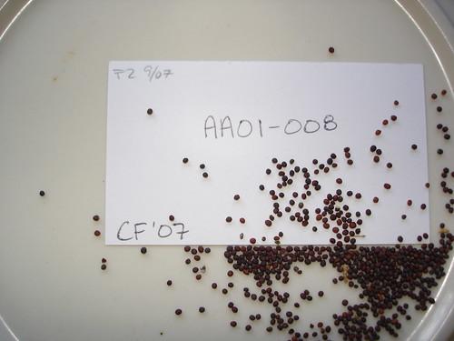 AA01-008 CF07 S5