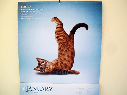 Yoga Cat Calendar