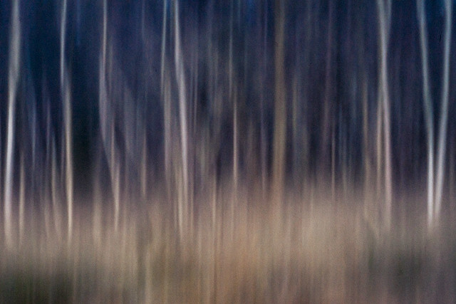 Wood's Edge