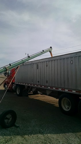 Loading corn bound for an ethanol plant.