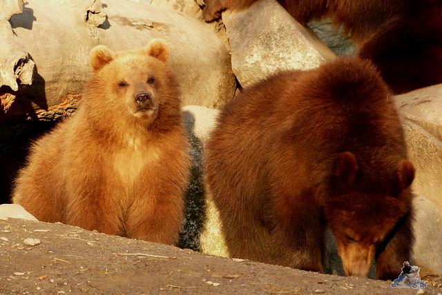 Tierpark Hagenbeck 27.02.2015  180