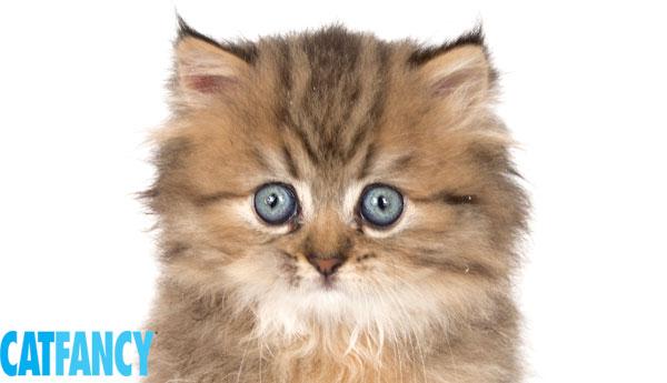 where can i buy catnip