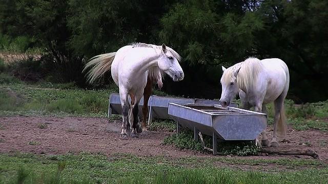 FRANCE - Provence, Pferde in der Camargue, (Serie), 73445/4750