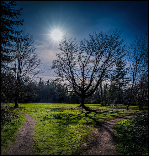 winter shadow sun silhouette shadows path surrey sunburst mapletree longshadow redwoodpark martinsmith southsurrey nikond7000 ©martinsmith nikkor1855mmf3556gvrii