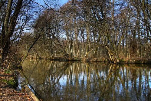 trees reflection river peace træer tranquility å fred ro erholung ruhe spejling gudenå klostermølle søhøjlandet guden
