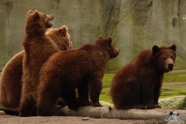 Tierpark Hagenbeck 14.03.2015  18