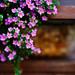 flowers by Jonas Tana