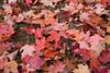 fall  landscapes-7