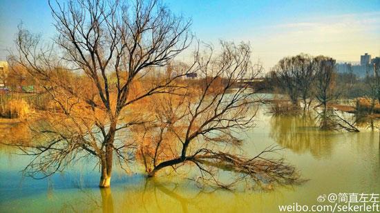 灞桥生态湿地公园