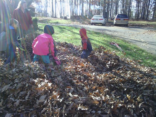 Nov 15 2014 Raking at Janet Puffenbarger (4)