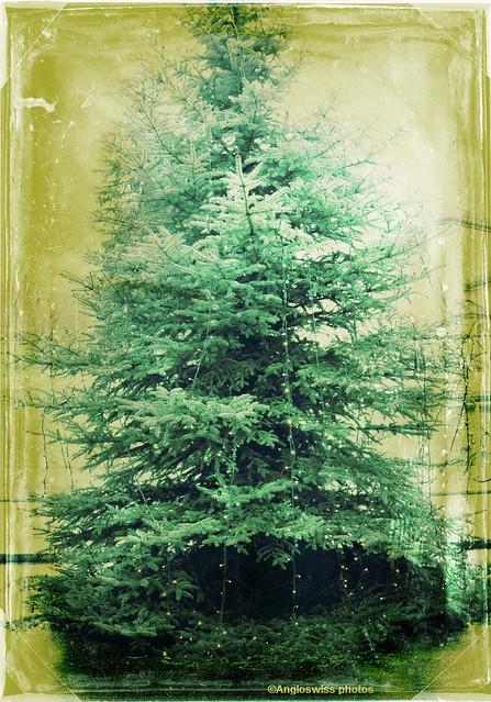 Christmas Tree Migros 2014