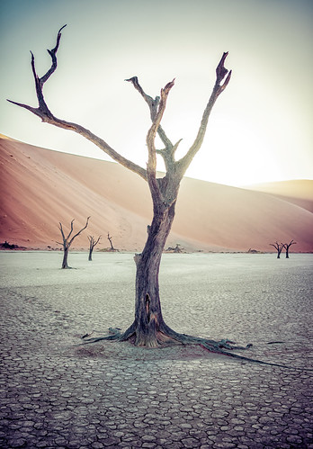 tree nature vertical sunrise nationalpark sand desert dune wideangle unescoworldheritagesite unesco worldheritagesite un unitednations educational sanddune 自然 namibia acacia wattle 자연 deadvlei 世界遗产 日出 國家公園 나무 camelthorn 일출 colorimage namibdesert worldculturalheritage thorntree claypan 沙丘 hardap namibnaukluftnationalpark dooievlei acaciaerioloba whistlingthorn kameeldoring 纳米比亚 유네스코 사구 나미비아 국립공원 scientificandculturalorganization republicofnamibia 유네스코세계문화유산 namibsandsea giraffethorn vastplace lorganisationdesnationsuniespourl'éducation onuésc vachelliaerioloba 納米布諾克盧福國家公園 納米布沙漠 나미브사막 하르다프주 mogohlo mogôtlhô 金合欢 아카시아속