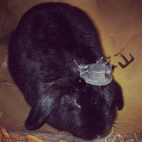 Lol Oreo is wearing a tiny top hat! #adorbs #bunnies
