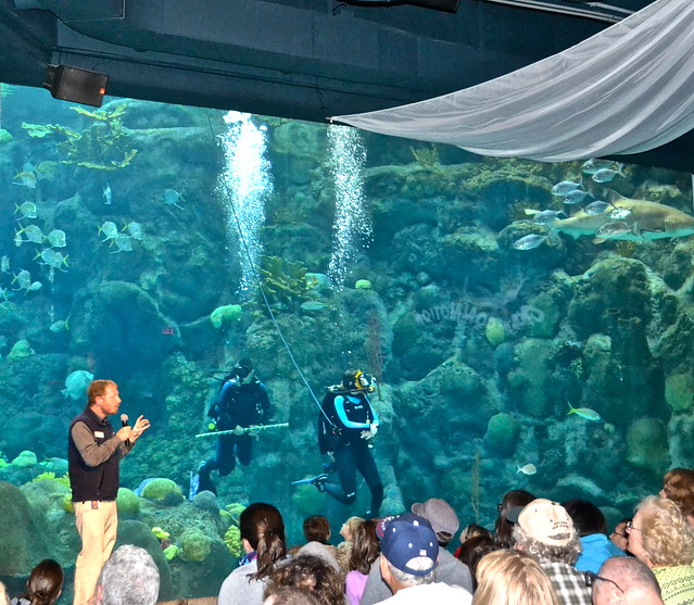 the florida aquarium - divers show