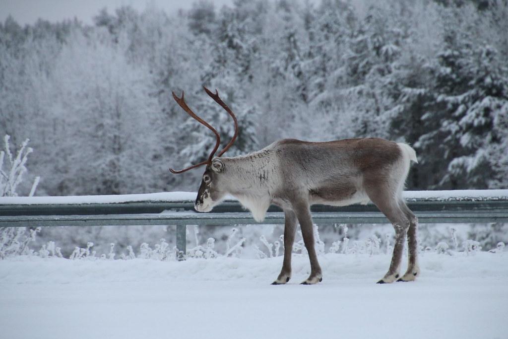 Finland118