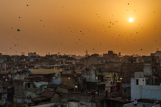 Sky filled with kites in Ahmedabad, Gujarat, India