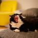 Tsuki yawn by Ronan Collett