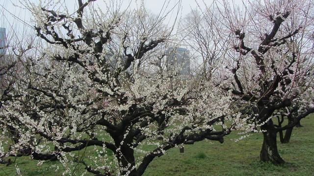 梅林 公園 大阪 城