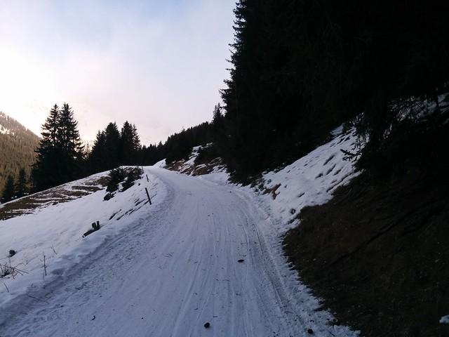 Gemütlich über den schönen Forstweg