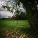 Golf in Thailand-Honda LPGA