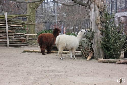 Berliner Zoo 22.02.201572