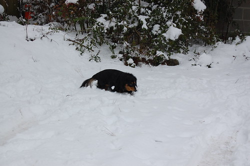 MY BBY WALKING IN THE SNOW